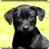 Adopt A Pet :: Gabby~ meet me! - Glastonbury, CT
