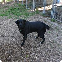 Adopt A Pet :: Stella - Geneseo, IL