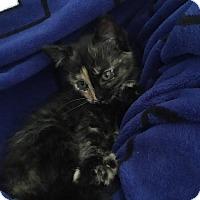 Adopt A Pet :: Luna - Sneads Ferry, NC