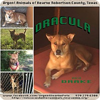 Shiba Inu Mix Dog for adoption in Hearne, Texas - Drake