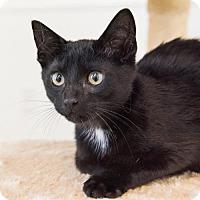 Adopt A Pet :: Knight - St. Paul, MN