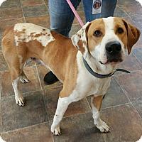Adopt A Pet :: Spots McGee - Lisbon, OH