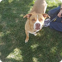 Adopt A Pet :: Yelawolf - Salt Lake City, UT