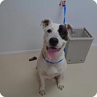 Adopt A Pet :: Pete - St Augustine, FL