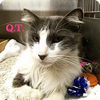 Adopt A Pet :: Q.T. - El Cajon, CA