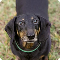 Adopt A Pet :: Adoption pending - Thomas - Orangeburg, SC
