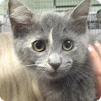 Adopt A Pet :: Guinevere - Reeds Spring, MO