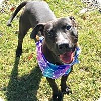 Adopt A Pet :: Rucker - Greensboro, NC
