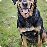 Adopt A Pet :: Moto - Midland, MI