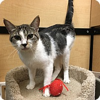 Adopt A Pet :: Leah - Riverside, CA