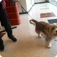 Adopt A Pet :: BONBON - Plano, TX