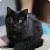 Adopt A Pet :: Spectre - Stafford, VA