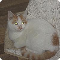Adopt A Pet :: Sprite - Newtown, CT