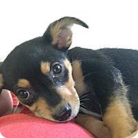 Adopt A Pet :: Nala (pending adoption) - El Cajon, CA