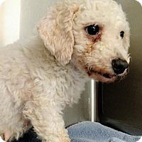 Adopt A Pet :: Gwenllian - Newark, DE