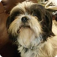 Adopt A Pet :: Flynn - Killian, LA