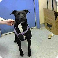 Adopt A Pet :: JUPPY - Louisville, KY