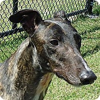 Adopt A Pet :: WWs Nomoretears - Longwood, FL