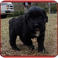 Adopt A Pet :: Lana Loo - Brattleboro, VT