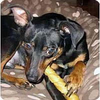 Adopt A Pet :: Otto - Nashville, TN