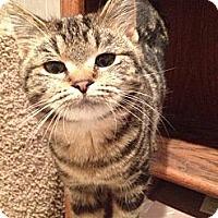 Adopt A Pet :: Esther - Byron Center, MI