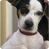 Adopt A Pet :: Pebbles - Jacksonville, FL