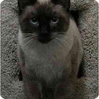 Adopt A Pet :: Rene - Davis, CA