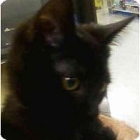 Adopt A Pet :: Jingle - Annapolis, MD