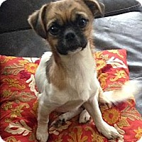 Adopt A Pet :: Bernie - Midway, KY