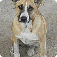 Adopt A Pet :: Lil Bit - Normandy, TN