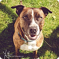 Adopt A Pet :: Hero (foster) - Portland, OR