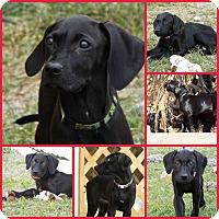 Adopt A Pet :: POLKA - Davenport, FL