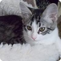 Adopt A Pet :: DaisyDuke - North Highlands, CA