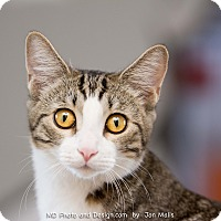 Adopt A Pet :: Angel - Fountain Hills, AZ