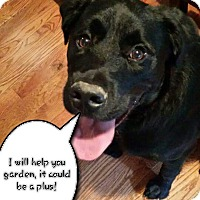 Adopt A Pet :: Jakers - Rexford, NY