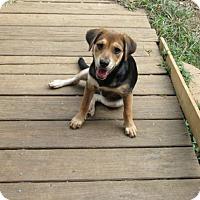 Adopt A Pet :: Calypso - Brookside, NJ