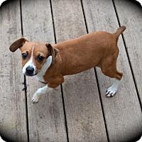 Adopt A Pet :: Anna - Ijamsville, MD