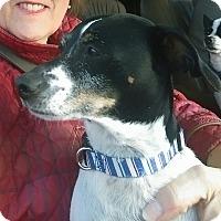 Adopt A Pet :: Abby - Charlestown, RI