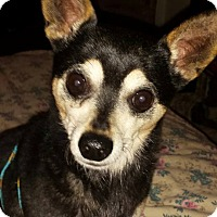 Adopt A Pet :: Coco - Plainview, NY
