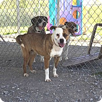 Adopt A Pet :: Hydra - Lewisburg, TN