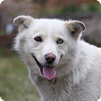Adopt A Pet :: NOVA - Ile-Perrot, QC