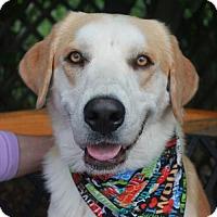 Adopt A Pet :: Grady - Garfield Heights, OH
