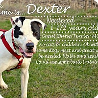 Adopt A Pet :: Dexter (3) - Saginaw, MI