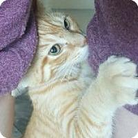 Adopt A Pet :: Samson - McHenry, IL
