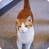 Adopt A Pet :: Ernie - Lincoln, NE