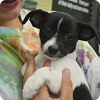 Adopt A Pet :: Toby - Ogden, UT