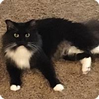Adopt A Pet :: Aurora - Bentonville, AR