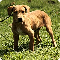 Adopt A Pet :: Colby - Plainfield, CT
