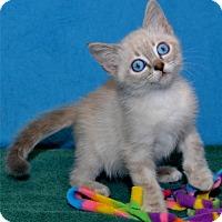 Adopt A Pet :: Maia - Lenexa, KS