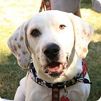 Adopt A Pet :: Tucker - Charleston, SC
